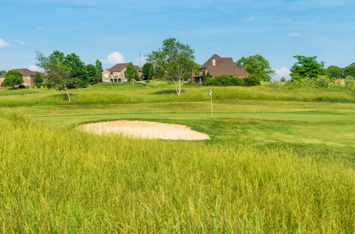 The bull golf course
